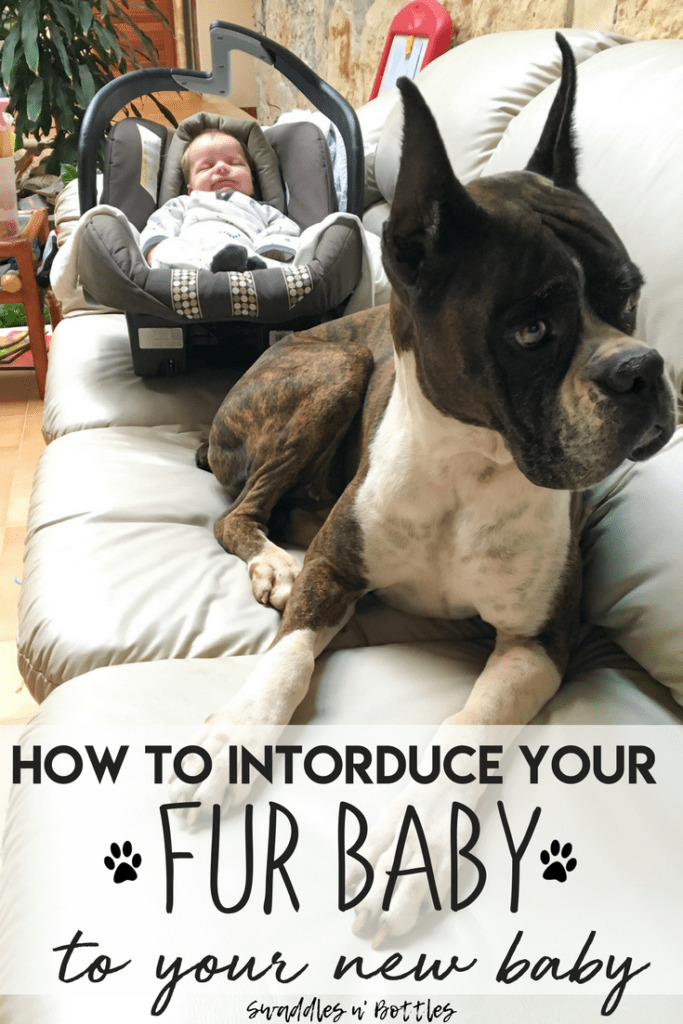 Tips for introducing your new baby to your Fur baby